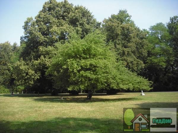 (park, 2 poł. XVIII, 1842, 1965-1969). Загружен из открытых источников.
