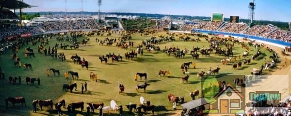 Сиднейский игровой стадион