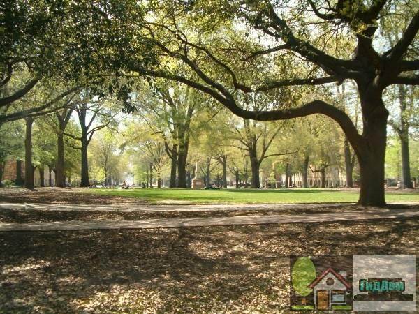 Район старого кампуса университета Южной Каролины (Old Campus District, University of South Carolina)