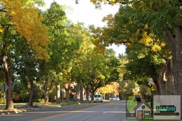Университетский бульвар (University Boulevard)